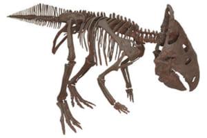 記念講演「恐竜時代の支配者 進化するモンタナの恐竜たち」