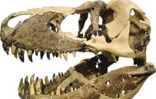 画像:記念講演「恐竜時代の支配者 進化するモンタナの恐竜たち」