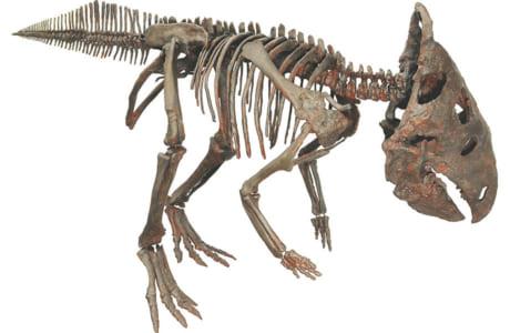 ケラシノプス