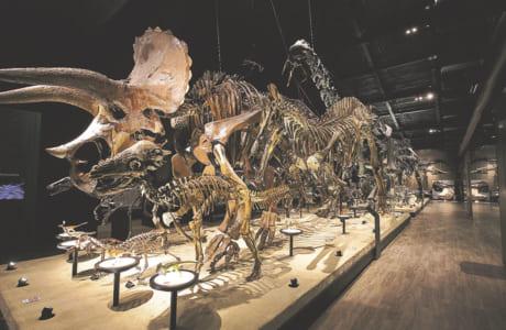 照明で浮かび上がる恐竜たち