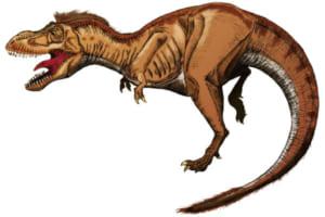 恐竜の分類が変わるかもしれない!?