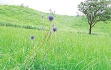 画像:森林自然観察・体験教室「ヒゴタイ公園」 夏だ!棚田だ!水源だ!!
