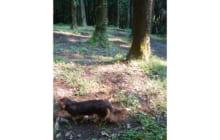 画像:愛犬と一緒に森を散策
