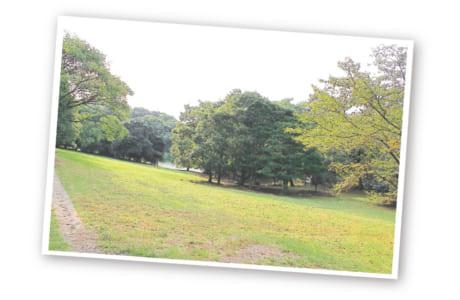 芝生広場などもあるので走り終わったらピクニックもいいかも