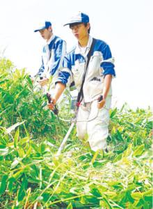 刈り払い機を操りながら、膝丈ほどもあるクマザサを刈り進む生徒たち