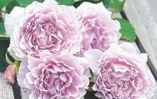 画像:ギフト用の鉢花が全国から入荷!! リース作り教室も大好評