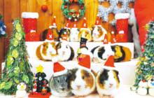 画像:~special thanks~クリスマス★夜間開園