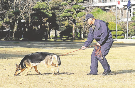 犯人のにおいを追う足跡追及の訓練