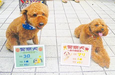 コロ(左)&マリ(トイプードル)