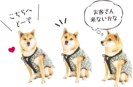 【犬種】柴犬