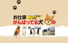 画像:【400号】すぱいすフォーカス – いろんな場面で大活躍! お仕事がんばってる犬(ケン)