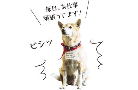 【犬種】ミックス