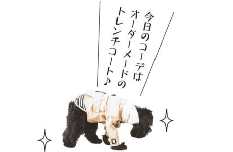 【犬種】アメリカンコッカースパニエル