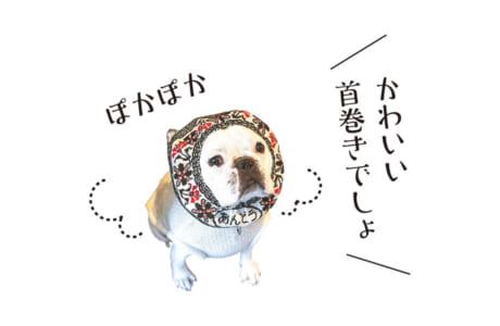 【犬種】フレンチブルドッグ