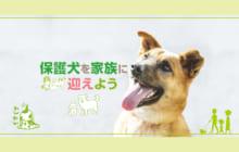 画像:【407号】保護犬を家族に迎えよう
