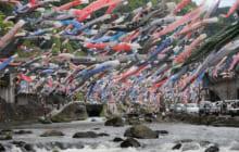 画像:杖立 鯉のぼり祭り