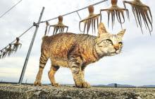 画像:企画展「猫島ありのまま 湯島から」