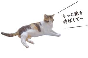 お寺の愛猫 ベル