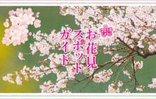 画像:【410号】すぱいすフォーカス – 2018 くまもと お花見スポットガイド