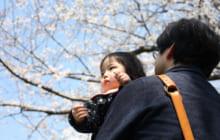 画像:【てつスポ】第5回「池に浮かぶ千年神社と桜の森の満開の下」 | 家族で楽しめる熊本の鉄道スポット