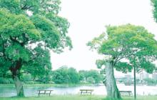 画像:江津湖Living