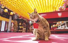 画像:岩合光昭の世界ネコ歩き写真展