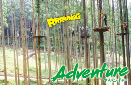 40ものアクティビティーの中には、高さ15mほどの木の上を移動するものも(汗)