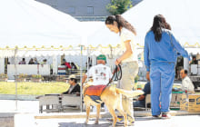 画像:動物愛護祭り ~ヒトと動物のふれあいをもとめて~