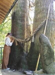 縁結びを祈願すると良縁に恵まれるといわれる「夫婦杉」。触ると心身の健康増進にもご利益があるといわれます