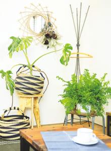 使用植物/(右)シダ、(左)モンステラ