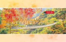 画像:【494号】すぱいすフォーカス – 県内のおすすめ紅葉スポット