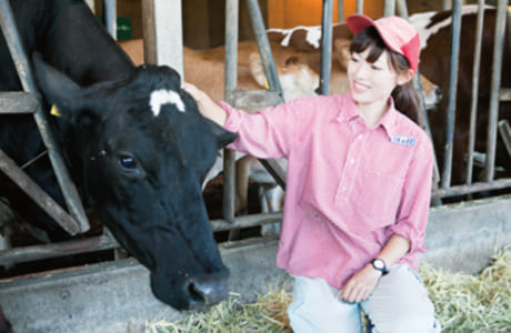 牧場内で、乳牛はのびのびと飼育されています