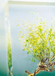 アクリル樹脂で固めると、花や葉をそのままの色で保存できます。標本の仕方も多様。それぞれ特徴があって面白い!