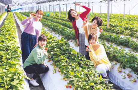 イチゴ狩り体験をした読者スタッフの(左下から時計回りで)西島明美さん、小山知枝さん、池田史恵さん、大塚里香さん、久保恵美さん