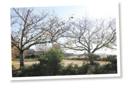 公園にはサクラやモミジが植えられていて、季節ごとにさまざまな色合いで住民を楽しませてくれます(写真提供/下内田公民館)