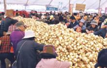 画像:サラたまちゃん祭り