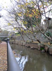 冬枯れの用水路