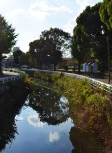 川沿いの公園 大きなクスノキが茂る
