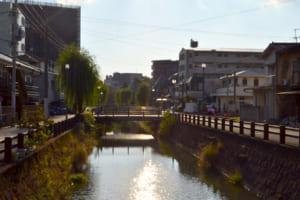 川の両岸に並ぶシダレヤナギ