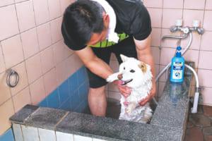 浴室にはワンちゃんサイズの湯船を完備。シャワーから気持ちの良い温泉が注がれます