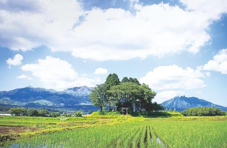 村の鎮守「中郷天満宮」の夏の風景。フェイスブックなどSNSで紹介
