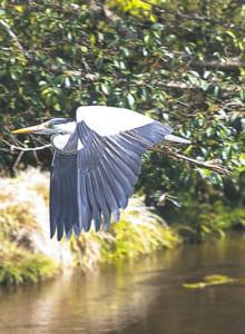 珍しい野鳥とも出合える江津湖は、まさにオアシス !