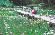 画像:天草花しょうぶ祭り&食と物産大バザール