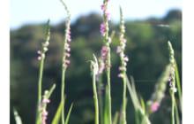 画像:天草自然散歩    尾中 潔