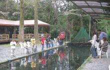 画像:【エリア情報 立ち寄りスポット】くまもと水の迎賓館 お手水(ちょうず)の森