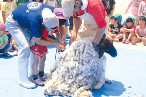 羊の毛刈りでは、命の大切さを学びます