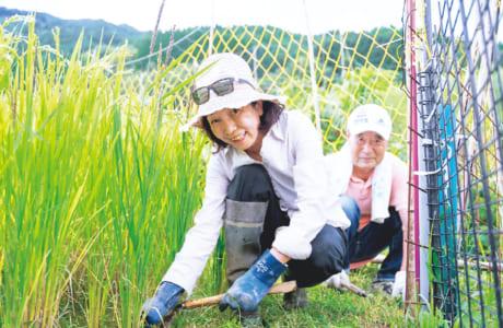 寺本さんは今年の秋に24回目の稲刈りを迎えます。収穫を目前に、田んぼの草取り、あぜの草刈りも大切な作業です