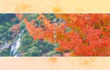 画像:【545号】すぱいすフォーカス – 秋限定の絶景 県内の紅葉スポット