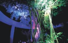 画像:全面開園1周年☆冬の夜間開園