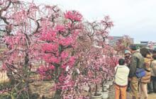 画像:セルモ特別協賛 くまもと春の植木市